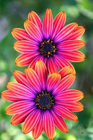 flowers images 936 best flowers images on pinterest plants nature and