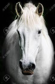 tableau portrait noir et blanc cheval noir banque d u0027images vecteurs et illustrations libres de