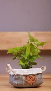 live indoor plants 12 best live indoor plants images on pinterest