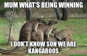 Kangaroo Meme - mum what s being winning i don t know son we are kangaroos