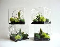 amazing terrarium glass bowls 98 glass terrarium bowl australia