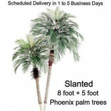 silk areca palm tree foter