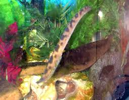 i would like to get some advice on eels would eel owners please