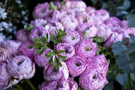 peonies flower peony flower meaning flower meaning