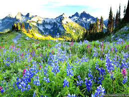 Beautiful Pictures Of Spring by Spring Landscapes 17 Best Images About Spring Landscapes On