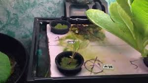 10 gallon fishtank aquaponic indoor garden system youtube