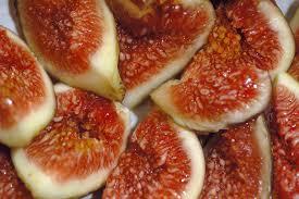 common fig wikipedia