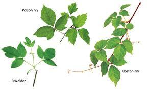 name that weed gardens u0026 books librarything