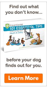 the 12 days of christmas pet hazards series