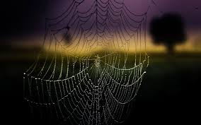 halloween spider background high quality spider web background wallpaper full hd pictures