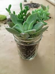 Succulent Plant Succulent Plants In Mason Jars How To Make A Perfect Hostess Gift
