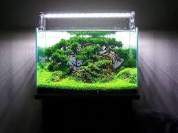Aquascape Designs Inc 260 Best Aquascaping Images On Pinterest Aquascaping Aquarium