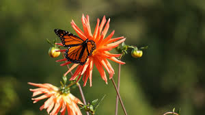 free images nature meadow flower petal orange insect