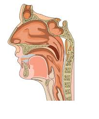 Anatomy Behind The Ear My Ent Blog Ear Nose And Throat Doctors In Hollywood Fl