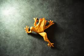toadly awesome un frog gettable and quite ribbitting origami frogs