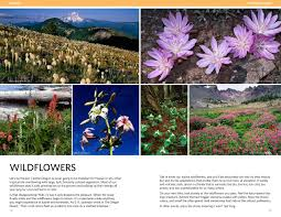 plants native to oregon the nature of bend leeann kriegh sarah craig 9780997521504