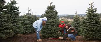 large brown christmas tree save the environment chop a real christmas tree