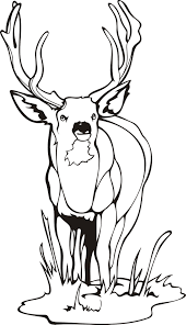 deer color pages funycoloring
