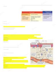 Com 3332 by Uh Biol 3332 Study Guide Final
