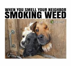 Stoned Dog Meme - when you smell neighbor smoking weed meme stoner dogs funny weed memes