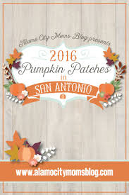 best 25 pumpkin patch san antonio ideas on san