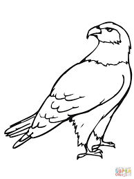 hawk bird coloring free printable coloring pages