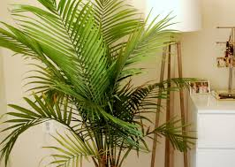 decorative trees for home brilliant figure wall mounted planters excellent plants for the