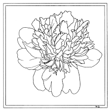 coloring pages u2013 delphina rose