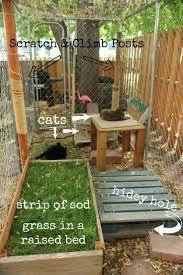 awesome large diy backyard cat enclosure cat outdoor cat