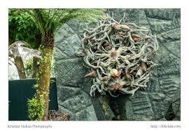 wood sculpture singapore glimpses of singapore part 5 krishna mohan photography