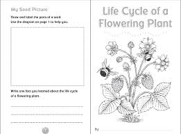 4th grade thanksgiving worksheets 10 ready to go resources for teaching life cycles scholastic