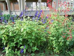413 best garden designing idea images on pinterest back garden