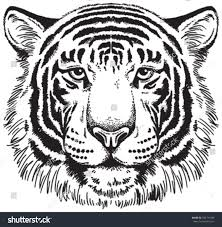 tiger black white vector sketch stock vector 2018 184741496