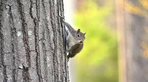 squirrel spirit totem symbolism and meaning