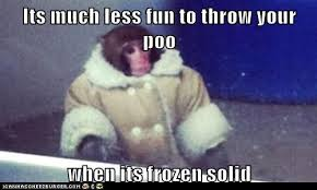 Meme Poop - animal capshunz throwing poop funny animal pictures with