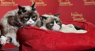 Grumpy Cat Memes Christmas - 10 grumpy cat christmas memes to send to your family members