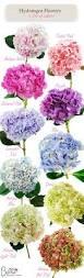Hydrangea Flowers 25 Best Hydrangea Colors Ideas On Pinterest Hydrangea Flowers