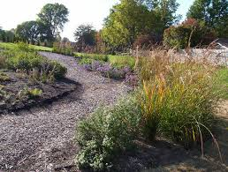 plants native to ohio here we go native ohio plants for the backyard redo home sweet