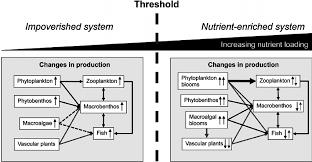 conceptual model for possible effects of eutrophication in