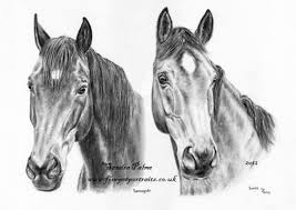 mustang horse drawing horse portraits charcoal drawings horse portraits from photos