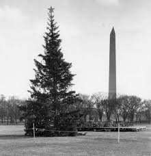 looking back at the national christmas tree tradition peeling