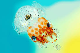 squid jpeg