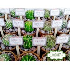 9 best succulents wedding souvenirs favors corporate