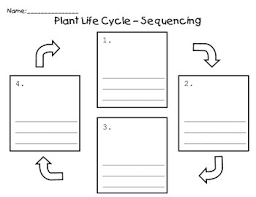use this graphic organizer to sequence the stages of a plant u0027s
