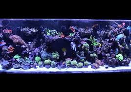 aquarium saltwater aquarium for beginners mad hatter u0027s reef