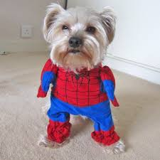 Small Dog Costumes Halloween 28 Spider Halloween Costume Dog Images