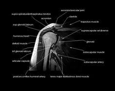 Ankle Ligament Tear Mri Mri Ankle Ligaments Google Search Anatomy Of The Ankle
