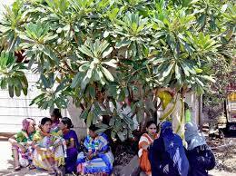 the shade of the tree karnataka the hindu