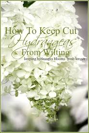 How To Revive Flowers In A Vase How To Keep Cut Hydrangeas From Wilting Stonegable