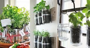 les herbes de cuisine 7 herbes aromatiques et médicinales faciles à faire pousser chez